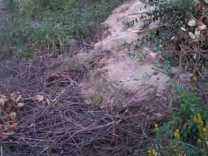 Foto del relleno hace un año: se pueden apreciar ramitas de sauce, abedul y roble y algo de tierra arenosa cubriendo parte del relleno