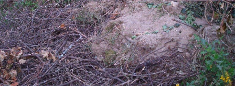 proyecto-betu-fragmento-foto-relleno-terreno-con-ramas
